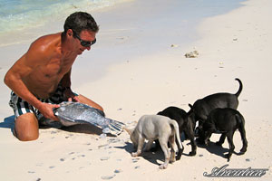 Hungry beach dogs