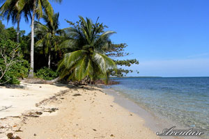 Desert beach in the Andamans